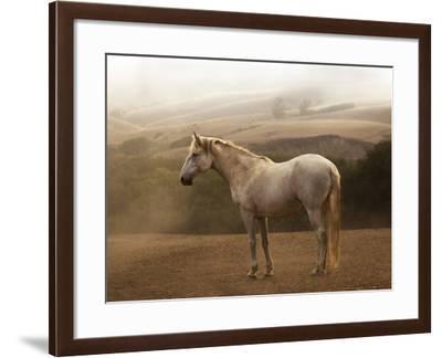 Morning Mist-Sally Linden-Framed Photographic Print