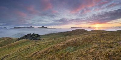 Morning Mood, Sheep Pasture, Wharariki, Tasman, South Island, New Zealand-Rainer Mirau-Photographic Print