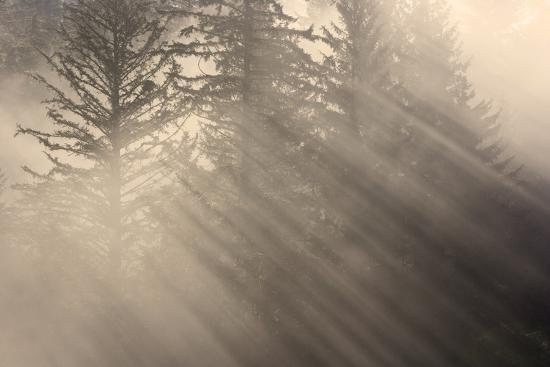 Morning Rays Shine Through the Mist and Spruce and Hemlock Trees Tongass National Forest-Design Pics Inc-Photographic Print