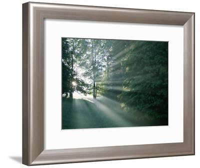 Morning Sunlight Casts Hazy Beams Through a Forest in Bavaria-Peter Carsten-Framed Photographic Print