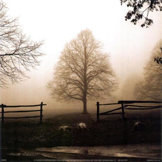 Morning Texture-Harold Silverman-Art Print