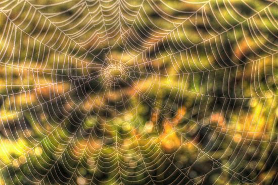 Morning Web-Robert Goldwitz-Photographic Print