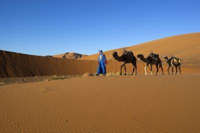 Moroccan Camel Driver-Stuart Black-Photographic Print
