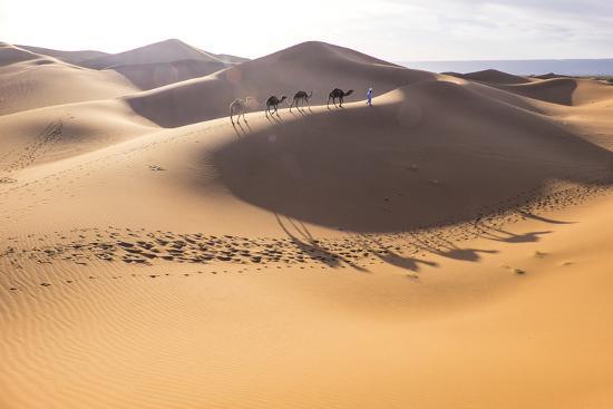 Morocco, Erg Chegaga Is a Saharan Sand Dune-Emily Wilson-Photographic Print