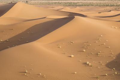 Morocco. Erg Chegaga Is a Saharan Sand Dune-Emily Wilson-Photographic Print