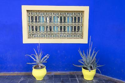 Morocco, Marrakech, Potted Succulent Plants Outside a Blue Building-Emily Wilson-Photographic Print