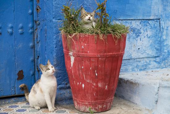 Morocco, Rabat, Sale, Kasbah Des Oudaias, Cats Hanging Out by a Potted Plant-Emily Wilson-Photographic Print