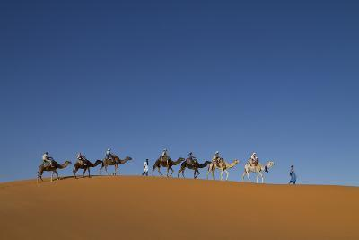 Morocco, Sahara. a Row of Camels Travels the Ridge of a Sand Dune-Brenda Tharp-Photographic Print