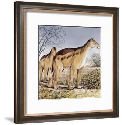 Moropus--Framed Art Print