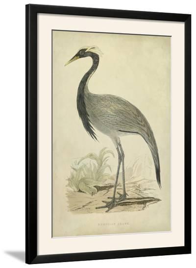 Morris Crane II--Framed Photographic Print