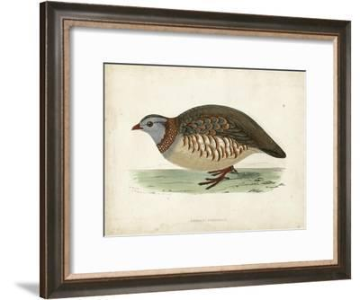 Morris Pheasants III--Framed Art Print