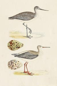Sandpipers & Eggs I by Morris