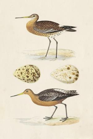 Sandpipers & Eggs IV