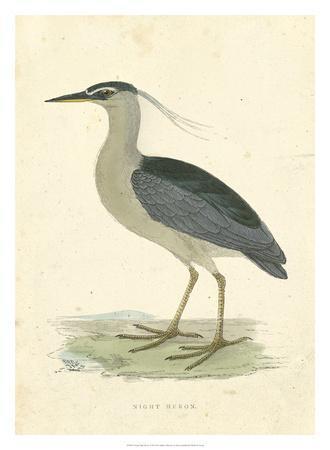 Vintage Night Heron
