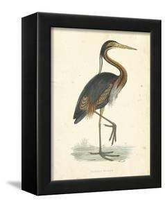 Vintage Purple Heron by Morris