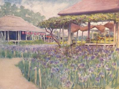 'An Iris Garden', 1903
