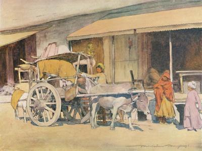 'A Bullock-cart, Ajmere', 1905