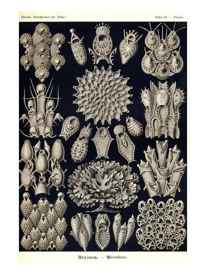 Moss Animals-Ernst Haeckel-Art Print