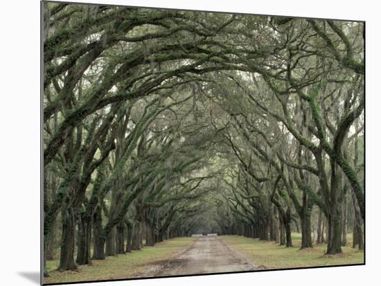 Moss-Covered Plantation Trees, Charleston, South Carolina, USA-Adam Jones-Mounted Photographic Print