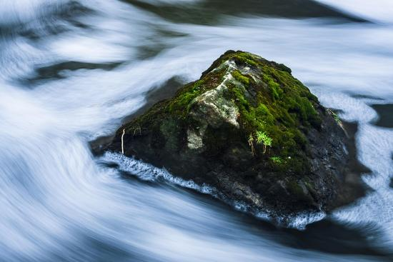 Moss Covered Rock Slow Swirling Water-Anthony Paladino-Giclee Print