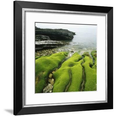 Moss Covered Rocks on Beach in Japan-Micha Pawlitzki-Framed Photographic Print
