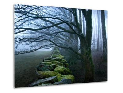 Moss Covered Stone Wall and Trees in Dense Fog-Tommy Martin-Metal Print