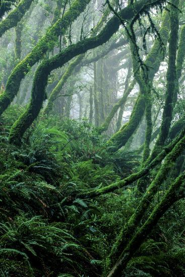 Moss-Covered Tree Trunks and Ferns in Muir Woods National Monument, California-Keith Ladzinski-Photographic Print