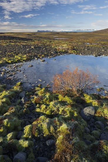 Moss Cushion, Shrub, Skaftafell, South Iceland, Iceland-Rainer Mirau-Photographic Print