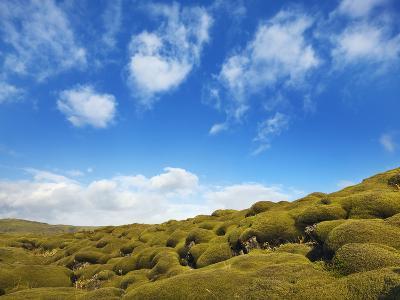 Moss landscape over lava field-Frank Krahmer-Photographic Print