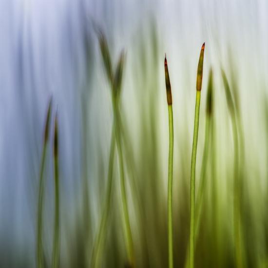 Moss-Ursula Abresch-Photographic Print
