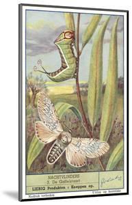Moth and Caterpillar