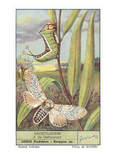Moth and Caterpillar--Art Print