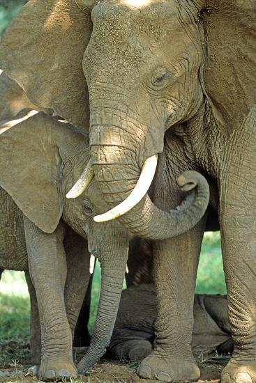 Mother African Elephant Protecting Two Babies-John Alves-Photographic Print