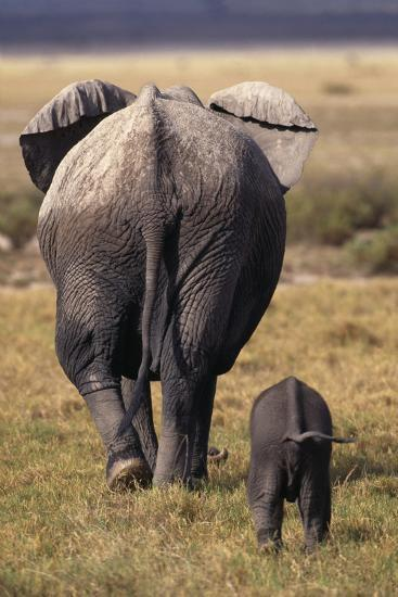 Mother and Baby Elephant-DLILLC-Photographic Print