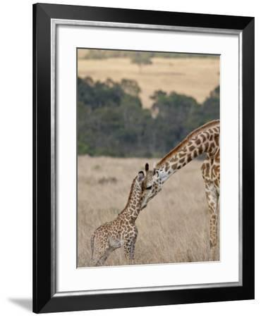 Mother and Baby Masai Giraffe Just Days Old-James Hager-Framed Photographic Print