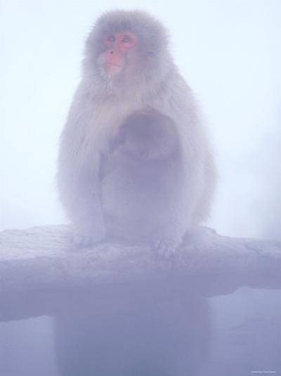 Mother and Baby Monkeys at Jigokudani Hot Spring, Nagano, Japan--Photographic Print