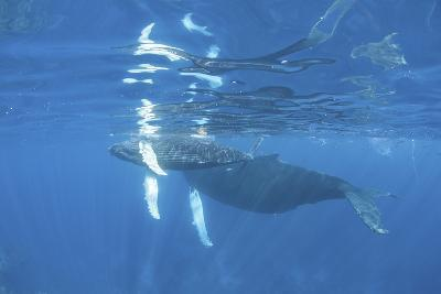 Mother and Calf Humpback Whales Swimming Just under the Surface-Stocktrek Images-Photographic Print