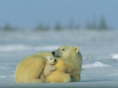 Mother and Cub Polar Bear Nestle Together for Warmth in the Arctic Landscape-Norbert Rosing-Photographic Print