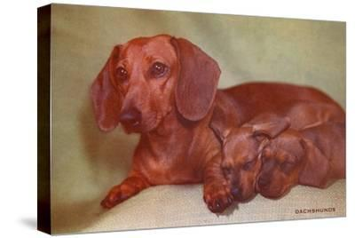 Mother Dachshund and Two Pups