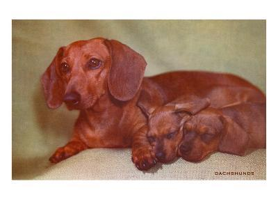 Mother Dachshund and Two Pups--Art Print