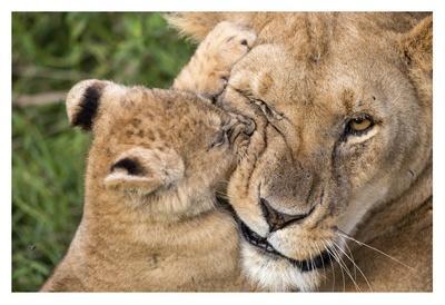 https://imgc.artprintimages.com/img/print/mother-love_u-l-f8wilh0.jpg?p=0