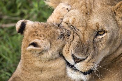 Mother Love-Alessandro Catta-Photographic Print