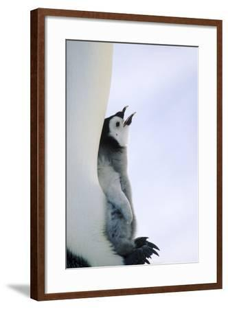 Mother Penguin Protecting Her Chick-DLILLC-Framed Photographic Print