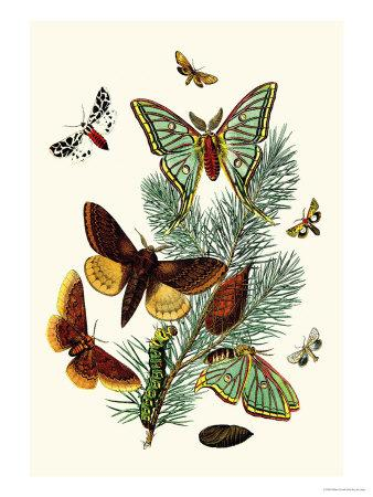 https://imgc.artprintimages.com/img/print/moths-e-pudica-e-pantheria-s-caecigena-l-lineosa_u-l-p2bn5l0.jpg?p=0