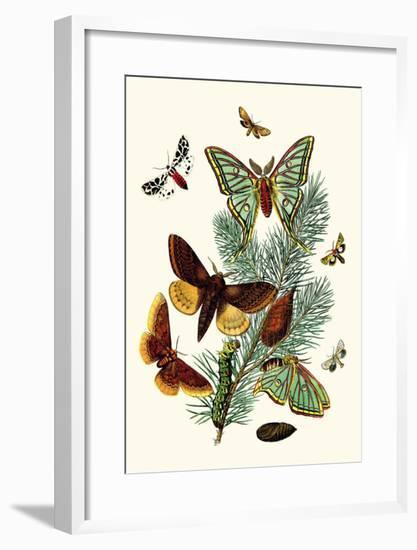 Moths: E. Pudica, E. Pantheria, S. Caecigena, L. Lineosa-William Forsell Kirby-Framed Art Print