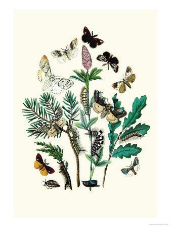 https://imgc.artprintimages.com/img/print/moths-o-gonostigma-d-pudibunda_u-l-p2bn730.jpg?p=0