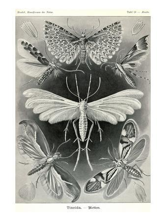 https://imgc.artprintimages.com/img/print/moths-tineida_u-l-pgfzgt0.jpg?p=0