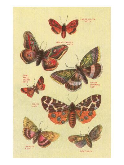 Moths--Art Print