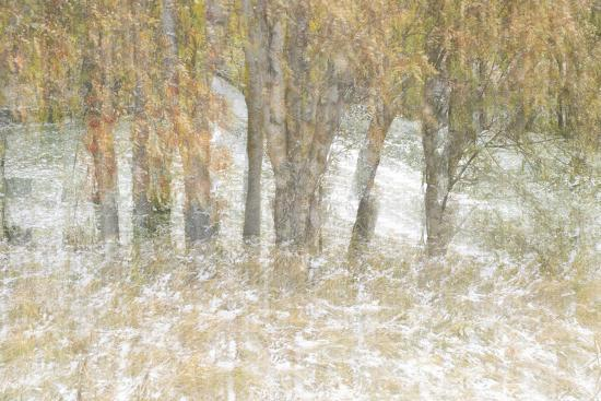 Motion Trees 3-Moises Levy-Photographic Print