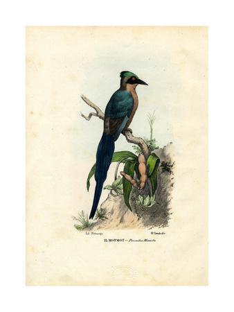 Motmot, 1863-79-Raimundo Petraroja-Giclee Print
